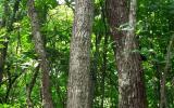tropical-timber-framing-lumber-hardwood-cabinets-3a.jpg