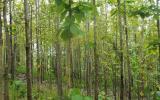 tropical-timber-framing-lumber-hardwood-cabinets-5a.jpg