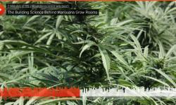 marijuana-grow-room-science-ventilation-moisture-mold.jpg