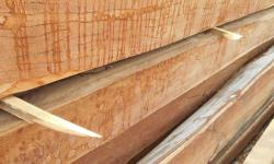 tropical-timber-framing-lumber-hardwood-cabinets-7-preview.jpg