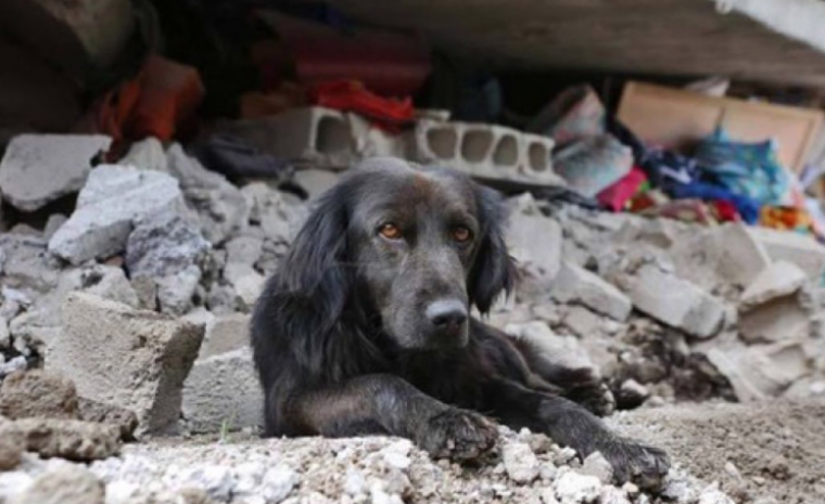 A dog outside his home that was ruined in the Ecuador earthquakes.