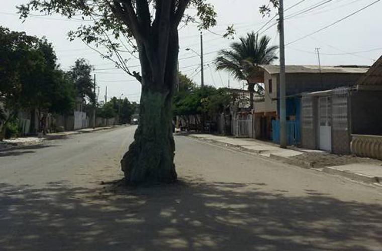 guasango-tree-horiz.jpg