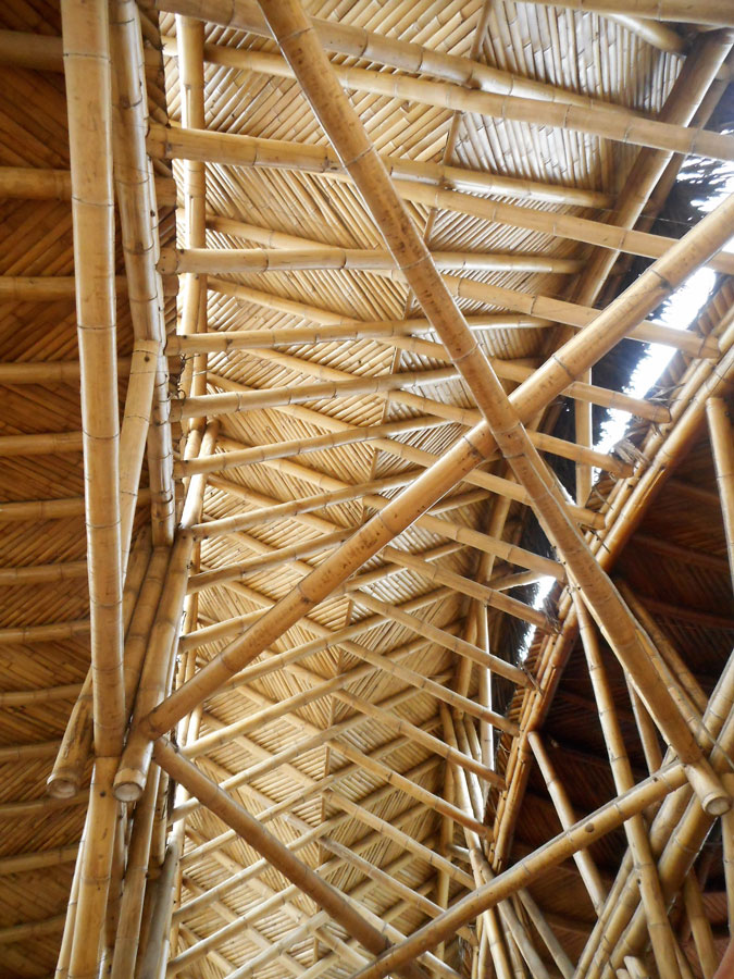 Tropical Timbers: From forest-to-framing | ProTradeCraft